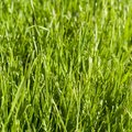 Uses of Chemical Fertilizers