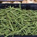 A List of Bush-Grown Vegetables