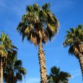 What Are the Parts of a Palm Tree?