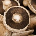 How to Grow Portobello Mushrooms at Home
