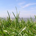 What Are the Dangers of Grazon Herbicide?