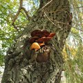 Tree Fungus Art