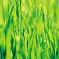 The Best Grass Seed for Hot Full Sun