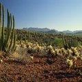 Types of Arizona Cactus