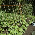 A List of Vertical Garden Vegetables
