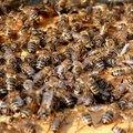 Bees & Light Fixtures