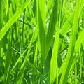What Does Fertilizer Do to Grass?