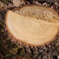 Laws on Burying Tree Stumps