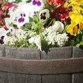 How to Arrange Flowers in a Wine Barrel Planter
