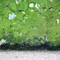 How to Remove Green Mold From Concrete
