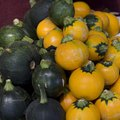 How to Promote More Female Flowers in Any Squash Plant