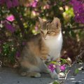 Are Petunias Poisonous to Cats?