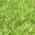 How Much Fertilizer Do I Need Per Acre of Grass?