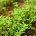 Soil Types in California