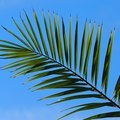 Uses of Palm Leaves