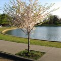 Symbolic Meaning of a Dogwood Tree