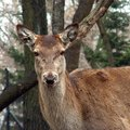 How to Keep Deer Away From Arborvitae