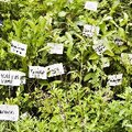 List of Plants That Can Grow in a Topsy Turvy