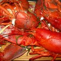 How to Compost Lobster Shells