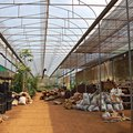 How to Find a Commercial Greenhouse for Rent