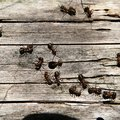 How to Kill Patio Ants