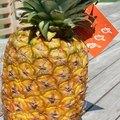 Pineapple Plant Fertilizer