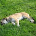 How to Fix Yellow Spots and Dog Urine Odors on Grass