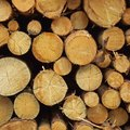 How to Cure Logs for a Log Home