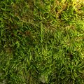 How to Kill Moss on the Lawn