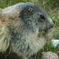 How to Use Glycerin to Get Rid of Groundhogs