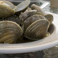 How to Compost Clam Shells