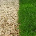 How to Get Rid of Crabgrass Forever