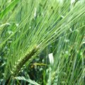 Is Ammonia Used for Grass & Weed Killer?