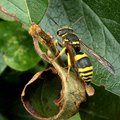 Is Wasp Spray Safe for Plants?