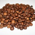 How to Grow Your Own Coffee Beans in Florida