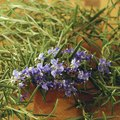 Herbs With Blue Flowers
