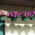 How to Make Self-Watering Hanging Baskets