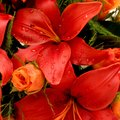 What Kinds of Flowers Go With Lilies?