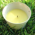 How to Use Citronella Spray for Fleas