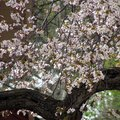 How to Grow Cherry Trees in Texas