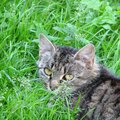 Is the Areca Palm Plant Toxic to Cats?