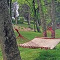 How Far Apart Should Trees Be for a Hammock?