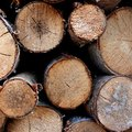 How to Cut & Cure Pine Logs