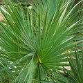 Indoor Palm Tree Tips for Leaves That Are Turning Brown