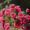 List of Different Types of Flowering Plants