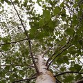 The Best Time to Trim Ash Trees