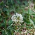 How to Use Ammonia to Kill Weeds