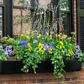 Good Plants & Flowers for Window Boxes