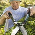 How to Remove Hedges