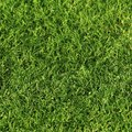 Does Ammonia Kill Grass?